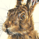 Thumbnail of The Hare