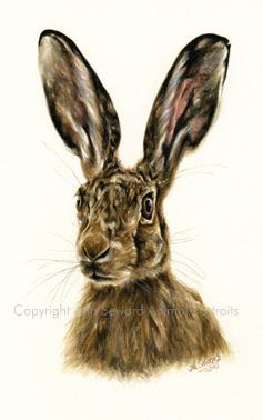 Hare Original 2