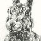 Thumbnail of Hare Sitting 2
