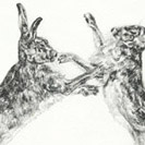 Thumbnail of Boxing Hares 4