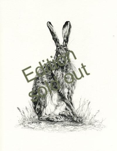 Hare Sitting 1