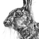 Thumbnail of Hare Crouching
