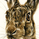 Thumbnail of Hare Original 2
