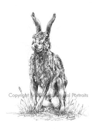 Hare Sitting 2