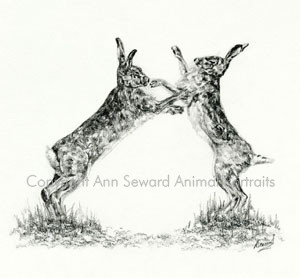 Boxing Hares 4