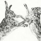 Thumbnail of Boxing Hares 4