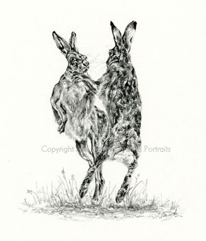 Boxing Hares 3