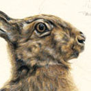 Thumbnail of The Leveret