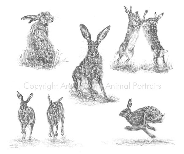 Quintessentially Hares
