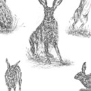 Thumbnail of Quintessentially Hares