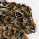Thumbnail of Hare Snoozing