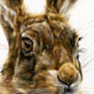 Thumbnail of Hare Original 1