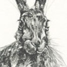 Thumbnail of Hare Sitting 1